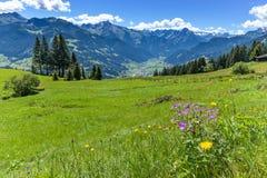 Mountain View alpino con il prato verde intenso nella priorità alta L'Austria, Tirolo, Zillertal, alta strada alpina di Zillertal Fotografie Stock
