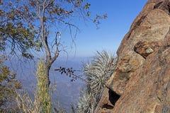 Mountain View Andes e vegeta??o de Aconcagua no dia claro no parque de Campana National do La no Chile central imagem de stock