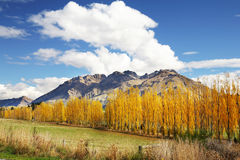 Mountain view in Autumn Stock Image