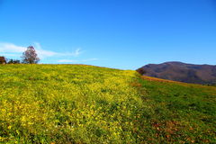 Mountain view in autumn. Mountain view with yellow field of rapeseed. Blue sky. Beskid Sądecki, Poland Royalty Free Stock Photos