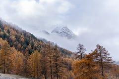 Mountain View av den Larchs skogen i höst royaltyfria foton