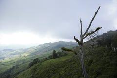 Mountain View avec le chemin chez Phu Tubberk, point de repère de touristes de province de Phetchabun en Thaïlande Photo stock