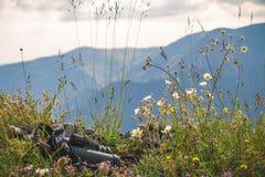 Mountain View Bionoculars i Dzicy kwiaty obraz royalty free