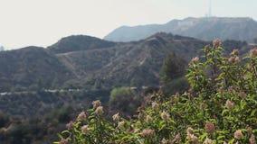 Mountain View bonito vídeos de arquivo