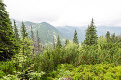 Mountain View brumoso de la mañana Imagenes de archivo