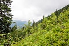 Mountain View brumoso de la mañana Foto de archivo libre de regalías