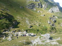 Mountain view in Bucegi Royalty Free Stock Photos