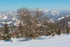 Mountain View carpathien neigeux d'hiver de plateau alpin garde photographie stock libre de droits