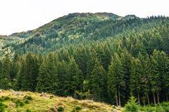 Mountain View carpathien sur la route de Transfagarasan en Roumanie photo libre de droits