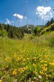 Mountain View cerca de Bansko, Bulgaria fotos de archivo