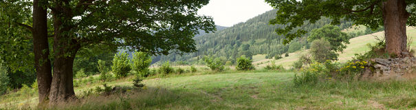 Mountain View com árvore grande Imagens de Stock Royalty Free
