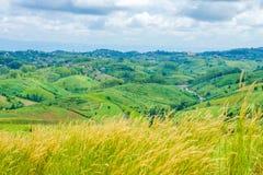 Mountain View com grama do desho no cume Imagem de Stock