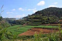 Mountain View con il campo nella valle nel Vietnam Immagini Stock Libere da Diritti