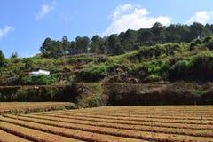Mountain View con il campo nella valle nel Vietnam Fotografie Stock
