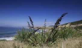 Mountain View, courants et lacs du Nouvelle-Zélande d Y Image libre de droits