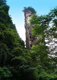 Mountain View das florestas foto de stock