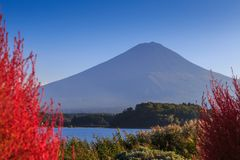 Mountain View de Fuji do lago Kawaguchi com a planta blured do Kochia Imagens de Stock Royalty Free