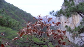 Mountain View in de Krim Steenbos in de herfsttijd stock video