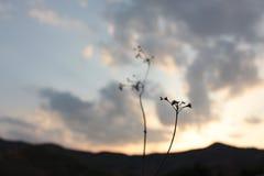 Mountain View de la puesta del sol y Fotografía de archivo libre de regalías