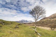 Mountain View del abedul y de Blaven de Cill Chriosd en la isla de Skye en Escocia Fotografía de archivo