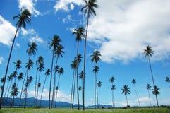 Mountain View delle palme Fotografia Stock