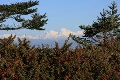 Mountain View di Kanchenjunga con il cespuglio Immagine Stock Libera da Diritti