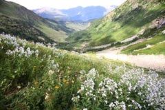 Mountain View do verão com flores Fotos de Stock