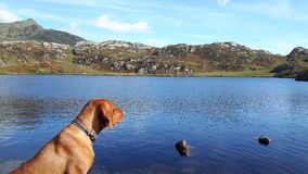 Mountain view with dog. View of lake at peak of mountain neighbouring snowdonia and lake at peak with dog in corner Stock Photo