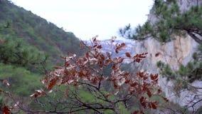 Mountain View en Crimea Bosque de piedra en tiempo del otoño almacen de video