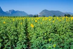 Mountain View en Geel gebied van zonnebloemen en heldere blauwe hemel Royalty-vrije Stock Foto's