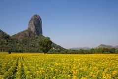 Mountain View en Geel gebied van zonnebloemen en heldere blauwe hemel Royalty-vrije Stock Fotografie