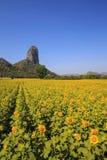 Mountain View en Geel gebied van zonnebloemen en heldere blauwe hemel Royalty-vrije Stock Afbeelding
