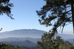Mountain View et pin Photo libre de droits
