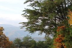 Mountain View with Fall Leaves Royalty Free Stock Images