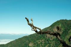 Mountain View, forêt, beau ciel Photo stock