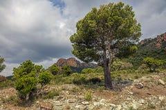 Mountain View gentil photographie stock libre de droits
