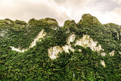 Mountain View with Green Trees. Animal-like shape royalty free stock photos