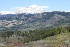 Mountain View in Idaho. Enjoyed the diagonal treeline pattern with this view Stock Images