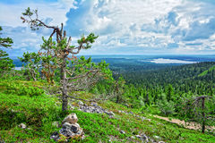 Mountain view. In  Lapland Finland Royalty Free Stock Images
