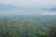 Mountain view of Mae wong national park with frog Royalty Free Stock Photos