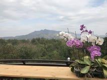 Mountain View mit Himmel- und Orchideenblumen lizenzfreie stockfotos