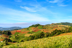 Mountain View morgens am chaingmai Thailand Stockbilder