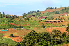 Mountain View morgens am chaingmai Thailand Stockfotografie