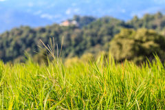 Mountain View morgens am chaingmai Thailand Lizenzfreie Stockfotografie