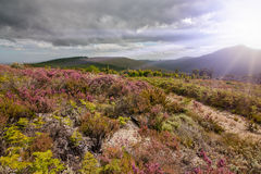 Natural fynbos Stock Images