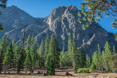 Mountain View nella foresta nazionale della sequoia Immagine Stock Libera da Diritti