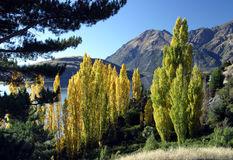 Mountain view, New Zealand. Mountain view with a poplars in autumnal colors in the foreground, New Zealand stock photography