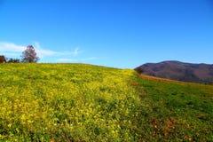 Mountain View no outono Fotos de Stock Royalty Free