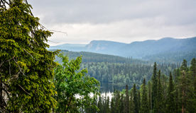 Mountain view. Over forest in cloudy day Royalty Free Stock Photos