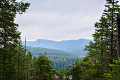 Mountain view. Over forest in cloudy day Stock Image